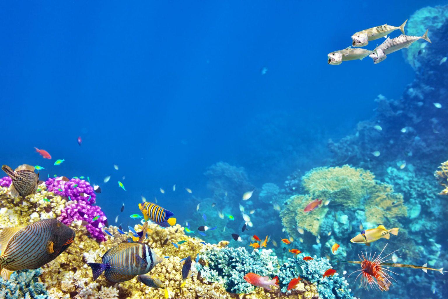 microbeads affect ocean life